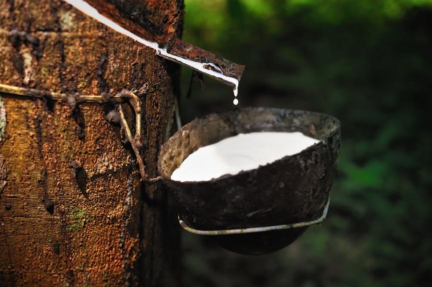 Naturlatex Vorteile Geschichte Produktion